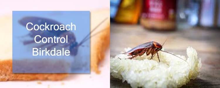 Cockroach Control Birkdale